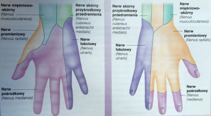 unerwienie ręki